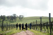 tallis-winery #7