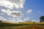 tallis-winery #11